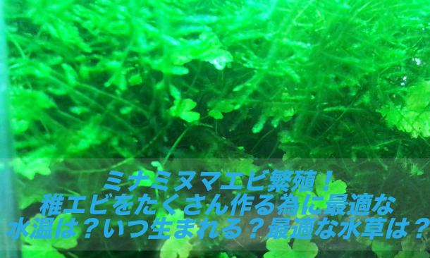 ミナミヌマエビ 水温