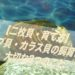 【二枚貝・育て方】ドブ貝・カラス貝の飼育に大切な3つのこと【飼い方・タナゴ】