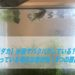 【メダカ】水面でパクパクしている?!白く濁っている場合は要対処!4つの原因とは【タナゴ】
