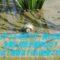 【タニシの育て方・飼い方】水槽に何匹が適切なの?エサは?寿命は?白い粘液これ何?